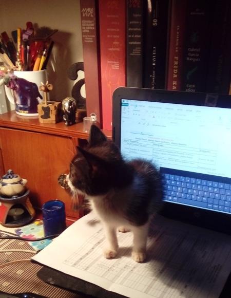 Milán en el computador.