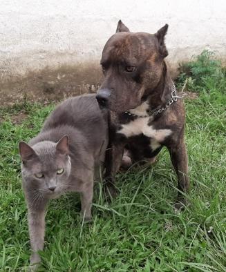 Entre perros y gatos se la llevan muy bien. Acá están Tomy y Konan, juntos y muy amigos.