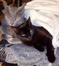 Tomy y Sasha, los inseparables.