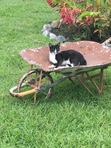 La gata de mis tíos, Tobita.